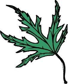 树木1437