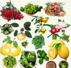水果与盆栽图片