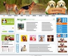 宠物网站模板图片